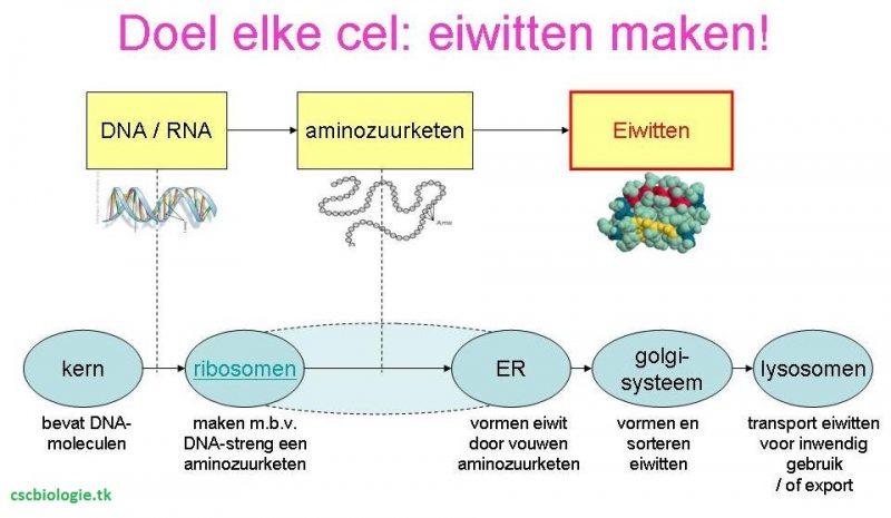 vreemde cellen in het lichaam